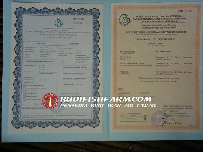 sertifikst ckib